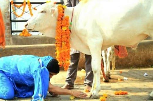 مسلم تنظیموں نے بالآخر کیوں کیا گائے کو قومی جانور قرار دینے کا مطالبہ؟
