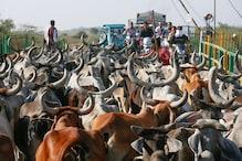 گائے کے ساتھ پاکستان کر رہا ہے حیران کر دینے والا کام