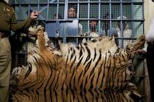 سیلفی لینےکے لئے  شیر کے پنجرے پر چڑھا نوجوان، جانئے پھر کیا ہوا