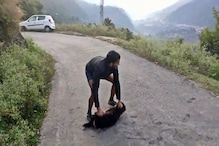 ٹک ٹاک ویڈیو بنانے کے لئے کتے کے ساتھ بربریت: دیکھیں ویڈیو اڑ جائیں گے ہوش