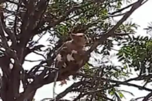 کورونا مریضوں کا بلڈ سیمپل  لے اڑا بندر ، دیکھتا رہا گیا میڈیکل اسٹاف ، مچا ہنگامہ