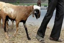 ممبئی: کورونا وائرس کے سبب حکومت کی گائیڈلائن سےقربانی کے جانوروں کی خرید و فروخت میں مسلمانوں کو دقت
