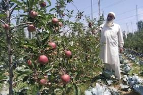 وادی کشمیر میں گرمی میں اضافہ اور بارش نہ ہونے سے فصلوں کو نقصان پہنچنے کا خطرہ