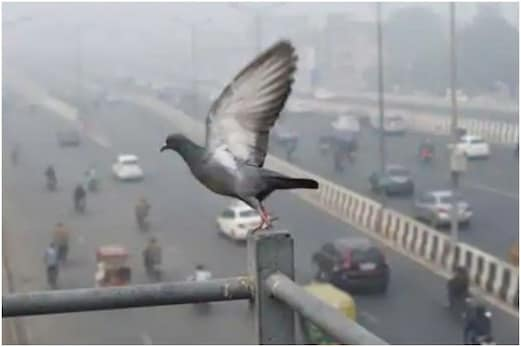 آپ اکیلے نہیں ہیں بیمار! دہلی۔NCR میں زہریلی ہوا سے73 فیصد گھروں میں کم از کم1 ممبر کی طبیعت خراب: سروے