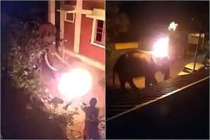 تمل ناڈو : سرپھرے شخص نے ہاتھی پر پھینکا جلتا ہوا ٹائر ، دل دہلا دینے والا ویڈیو وائرل