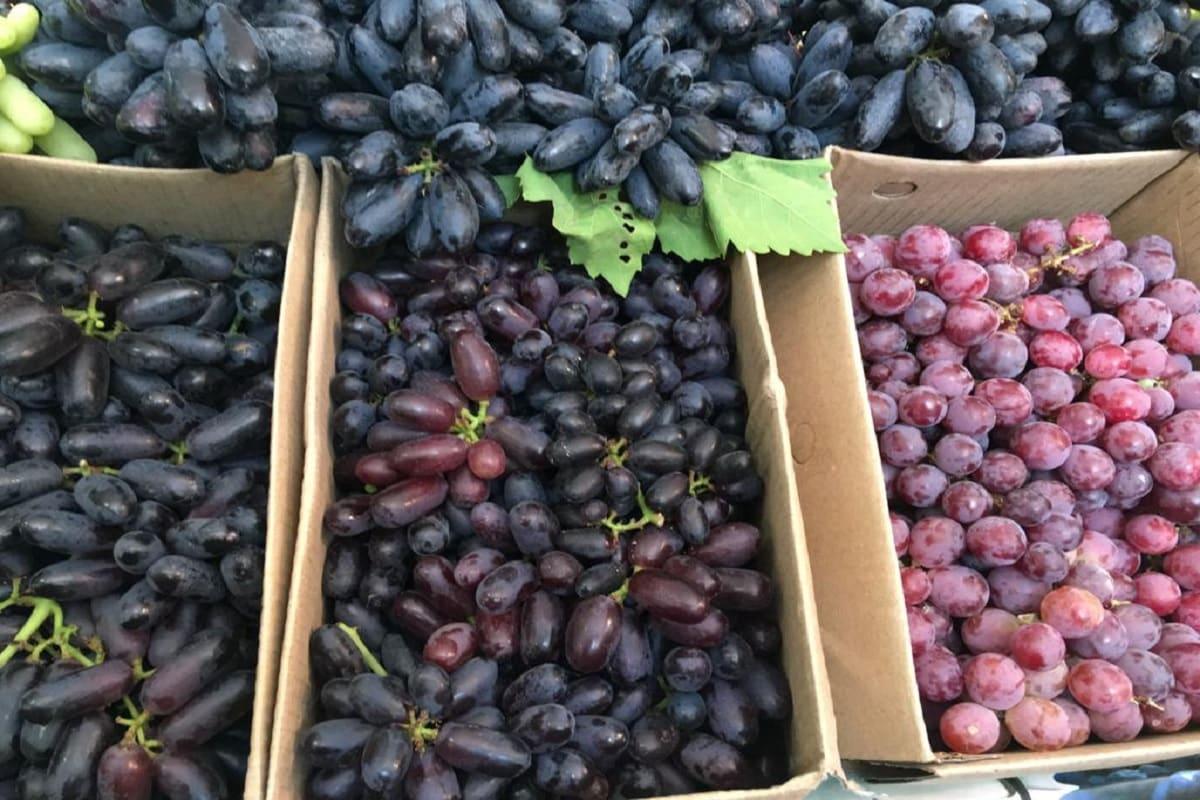 میلے میں ملک اور بیرونی ممالک کے انگوروں کی قسمیں موجود ہیں۔ مصر اور آسٹریلیا کے ریڈ گلوب نامی انگور یہاں فروخت کئے جارہے ہیں۔