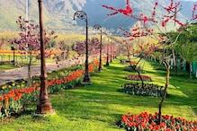 وادی کشمیر کا خوبصورت باغ گل لالہ 25 مارچ سے عوام کیلئے کھلا، زندگی میں چھائی ہے مایوسی تو ضرو جائیں Tulip Garden، من کو ملے گا سکون