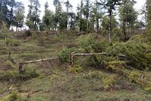 جموں و کشمیر : جنگلات میں بے دریغ کی جارہی ہے سبز سونے کٹائی ، محکمہ جنگلات لاعلم