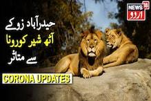 کے آٹھ ببر شیر کورونا سے متاثر، بھوک، کھانسی، ناک بہنا، گوشت نہ کھانا جیسی علامات۔۔