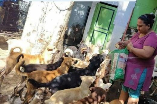 جموں میں ایک کشمیری پنڈت خاندان نے قائم کی انسانیت کی مثال، جانوروں کو کھانا کھلانے کے لئے اپنا سارا قیمتی سامان بیچ دیا