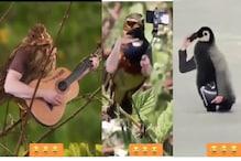 ہاتھوں سے گٹار بجا رہے پرندے، چلا رہے لیپ ٹاپ، دیکھیں بیحد ہی خوبصوت ویڈیو
