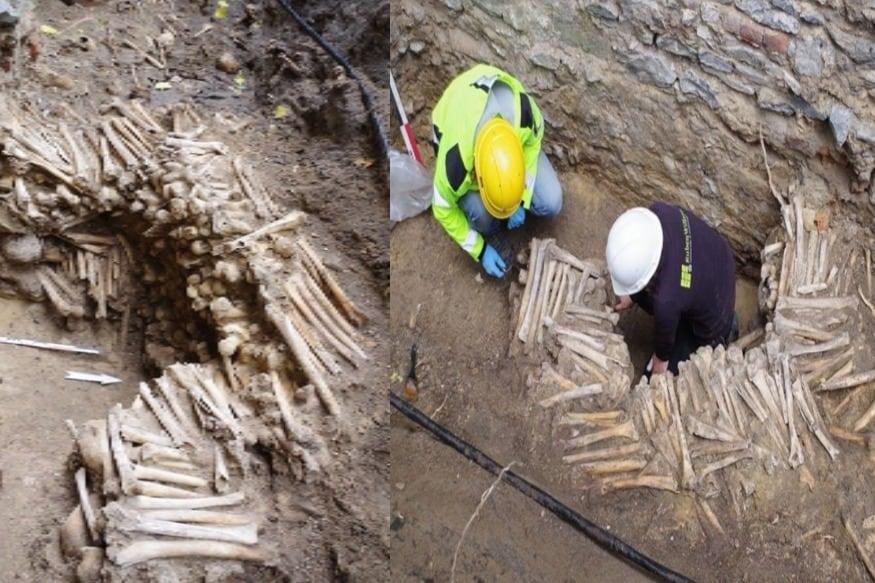 பெல்ஜியத்தில் மனித எலும்புகளால் உருவாக்கப்பட்ட 500 ஆண்டுகள் பழமையான சுவரை தொல்பொருள் ஆராய்ச்சியாளர்கள் கண்டுபிடித்துள்ளனர்.