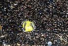 ஜார்ஜ் பிளாய்டு மரணத்திற்கு நீதிகேட்டு 11-வது நாளாக தொடரும் போராட்டம்