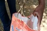 கோவையில் பிடிபட்ட அதிக நச்சுத்தன்மை கொண்ட கண்ணாடிவிரியன் பாம்பு