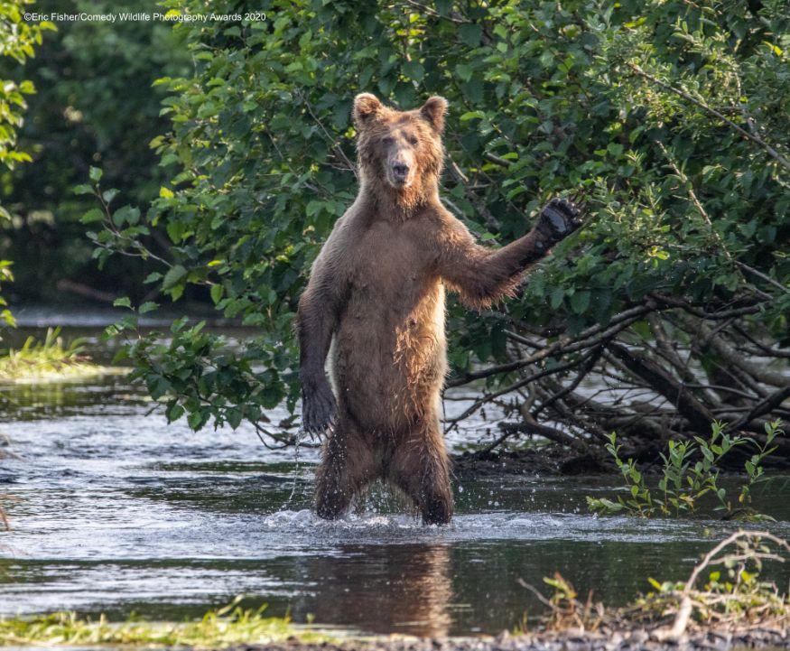 ஹாய் எல்லாரும் எப்படி இருக்கீங்க.... (Image: Eric Fisher/Comedy Wildlife Photo Awards 2020)