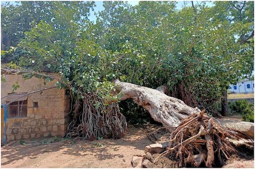 கோவில்பட்டி அருகே பலத்த காற்று: வேரோடு சரிந்து விழுந்த 300 ஆண்டுகள் பழமையான ஆலமரம்
