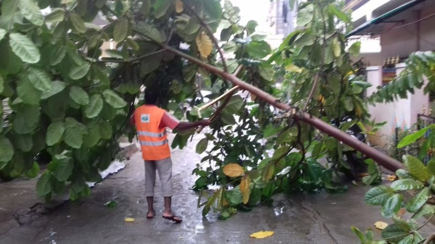 Rescue Services personnel were called in to cut away the trees that fell across the road due to incessant rain. (Image: News18)
