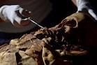 Egyptian mummy : 2700 ஆண்டுக்கு முற்பட்ட மம்மிக்கு சி.டி.ஸ்கேன்