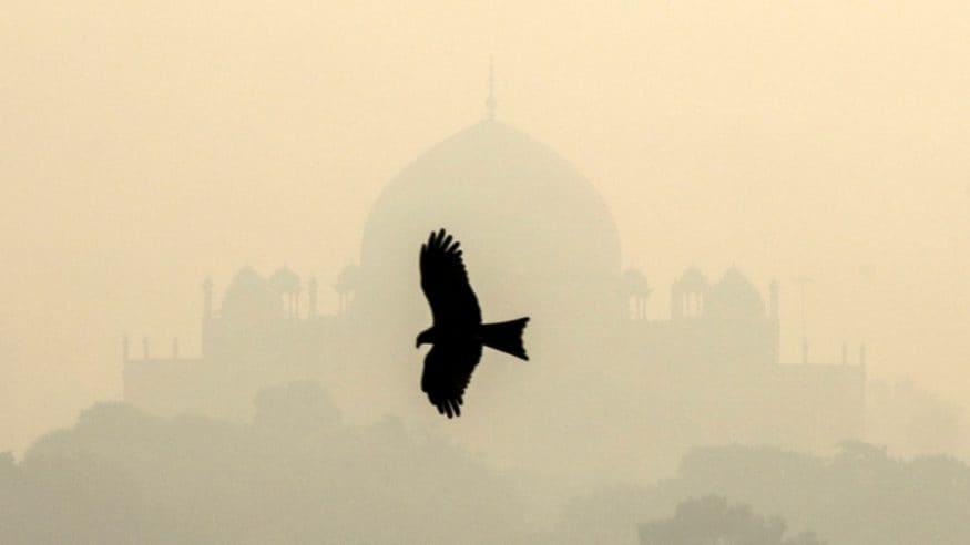 దట్టమైన పొగమంచు కప్పుకున్న హుమయూన్ టోంబ్ వద్ద ఎగురుతున్న ఓ పక్షి (Image: Reuters)