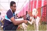 Video:  బెంగళూరులో ఆకట్టుకున్న శునకాల ప్రదర్శన