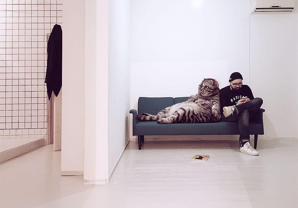 పిల్లులతో ఆండ్రీ ఊహా ప్రపంచం (Image : Instagram - odnoboko)