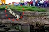 Video : బావిలో దూకిన మొసలి... ఆ తర్వాత...