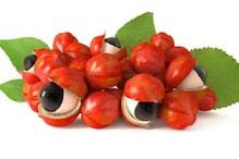 Guarana Fruit: అమెజాన్ వయాగ్రా... గ్వారానా పండుకి ఎందుకంత క్రేజ్