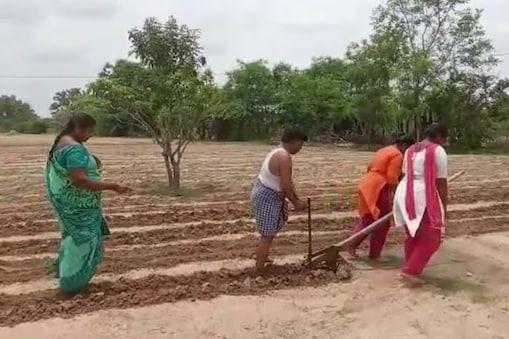 Video: నాన్న కోసం నాగలిపట్టిన కూతుళ్లు... ఎద్దులుగా మారి..