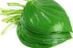 Bhakti: ఈ ఆకుల్ని ఇలా పెట్టుకుంటే డబ్బే డబ్బు... పండితులు ఏమంటున్నారంటే...