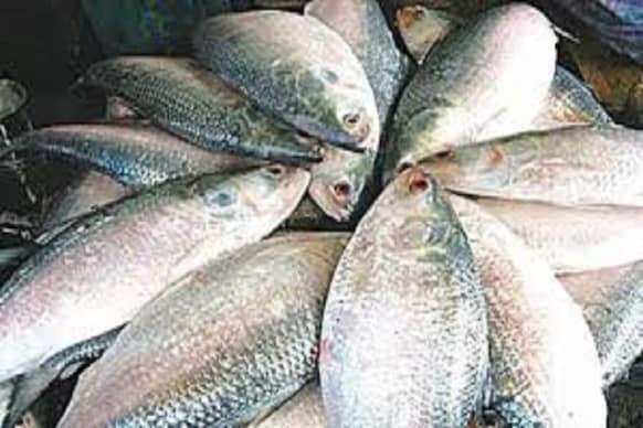 Hilsa fish: భారత్ తో ఆ దేశం చేపల బేరం?.. వ్యాక్సిన్ ఇస్తేనే పులస చేపలిస్తాం?