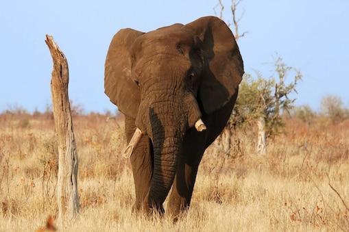 Wildlife Poaching: ఉపాధి లేక వన్యప్రాణుల వేట.. పేదరికంతో అల్లాడుతున్నారు..