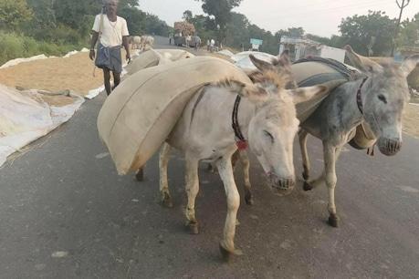 Donkeys: ఆ జిల్లాలో రైతులను ఆదుకుంటున్న గాడిదలు.. ఎలాగంటే..