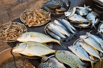 Andhra Pradesh: సర్కారువారి చేపలు, రొయ్యలు... రండి బాబు రండి...
