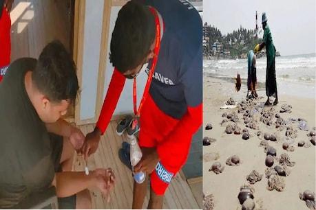 Jelly Fish: గోవా బీచుల్లో జెల్లీ లొల్లి.. 48 గంటల్లో 90 కేసుల నమోదు