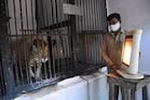 Nehru Zoological Park: చలి నుంచి జంతువుల, పక్షుల రక్షణకు జూపార్క్లో ప్రత్యేక ఏర్పాట్లు