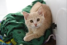 Cat And Snake Fight: యజమాని పిల్లలను కాపాడేందుకు పాముతో పోరాడిన పిల్లి... చివరికి ఏమైందంటే..