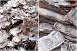 Andhra Pradesh: ట్రంకు పెట్టెలో దాచిన రూ.5 లక్షలు చెదలపాలు... ఎక్కడో తెలుసా..?