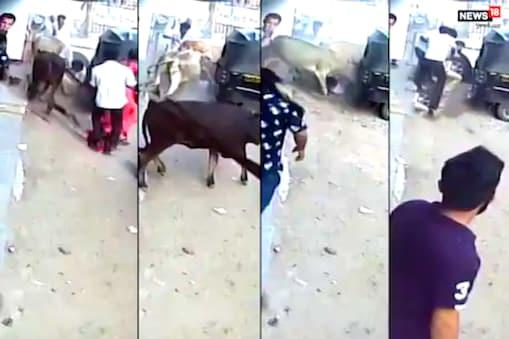 CCTV: రెచ్చిపోయిన ఆవులు... కుక్క, దాని యజమానిపై దాడి... వీడియో చూడండి
