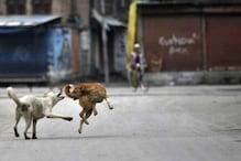 Dogs Attack: రెచ్చిపోతున్న గ్రామ సింహాలు.. కుక్కల దాడిలో 20 మేక పిల్లలు మృతి..