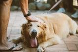 Dog DNA Test: శునకం కోసం ఇద్దరి ఫైట్.. ఇక లాభం లేదని కుక్కకు డీఎన్ఏ టెస్ట్.. చివరికి..