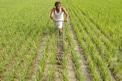 Telangana Rythu Bandhu: ఆ గ్రామంలో పట్టాలున్నా.. రైతుబంధు సున్నా.. నాలుగేళ్లుగా అందని..