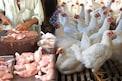 Chicken Price: నాన్ వెజ్ ప్రియులకు గుడ్ న్యూస్.. క్రమంగా తగ్గుకుంటూ వస్తున్న చికెన్ ధరలు..