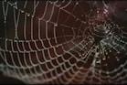 Remove Spiders From Home: ఇంట్లో సాలీడు సమస్య ఉందా ?ఇలా చేయండి.. వెంటనే బయటకు వెళ్లిపోతాయి