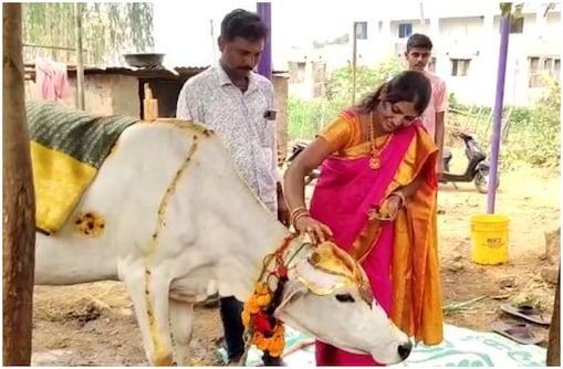 Andhra Pradesh: గోమాతకు ఘనంగా సీమంతం.. కూతురు లేని లోటును ఇలా తీర్చుకున్న దంపతులు..