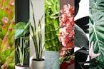 Vastu - 7 Plants: ఇంట్లో ఈ 7 మొక్కలు ఉంటే... అదృష్టం, సంపద మీదే...