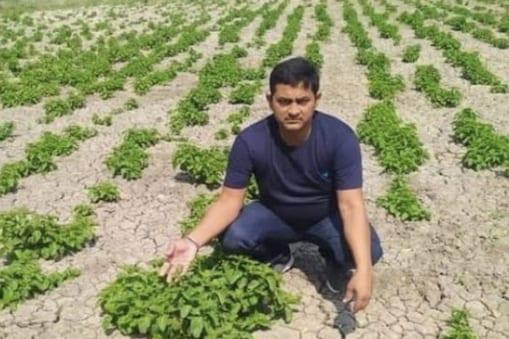 Bihar Farmer: బీహార్లో ఈ రైతు పండిస్తున్న కూరగాయ ధర కిలో లక్ష రూపాయలు.. పెట్టుబడి ఎంత తక్కువో తెలిస్తే..