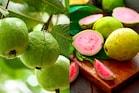 Pink guava:  పింక్ జామకాయ తింటున్నారా...అయితే ఇది తప్పకుండా చదివి తీరాల్సిందే...