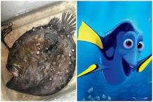 Football Fish: 'ఫైండింగ్ నీమో' మూవీ చూశారా? అచ్చం అలాంటి చేపే ఇది.. ఒడ్డుకు కొట్టుకొచ్చింది