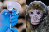 Oakland Zoo: అమెరికా ఓక్లాండో జూలో వినూత్న ప్రయోగం.. జంతువులకు సైతం కరోనా వ్యాక్సిన్