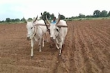 Women Farmer: నాగలి చేత పట్టి.. ఇతరులకు ఆదర్శంగా నిలుస్తోన్న మహిళా రైతు..